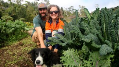 Photo of Move over Netflix, farmers turning to subscription to sell fresh veggies