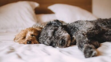 Photo of Third of us let our dogs sleep in our beds