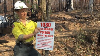 Photo of NPWS hits back at environmentalist's 1080 claims as aerial baiting set to begin