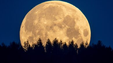 Photo of A rare Blue Blood Moon rises on Halloween. Here's what that means.