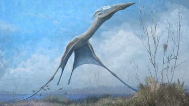 Photo of Pterosaurs Evolved Their Flight Ability over Millions of Years: Study
