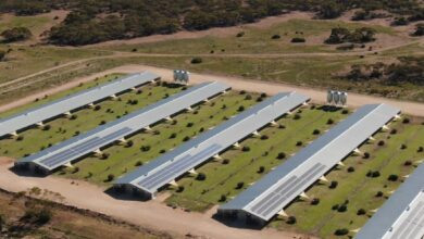 Photo of Massive free-range chicken farm slashes costs with sustainable solar power and composting