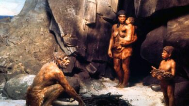 Photo of New Research Sheds Light on Early Life of Neanderthals