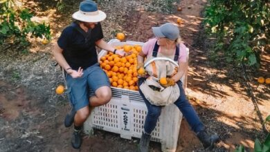 Photo of New app for backpackers hoped to improve farm labour shortages