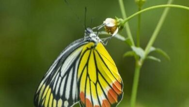 Photo of Rare butterflies spotted across India