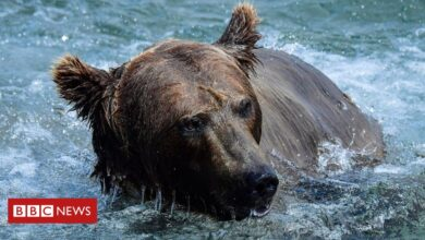 Photo of Mother bear and cub shot after climbing onto Russian nuclear submarine