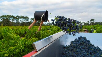 Photo of China launches second trade probe into Australian wine imports