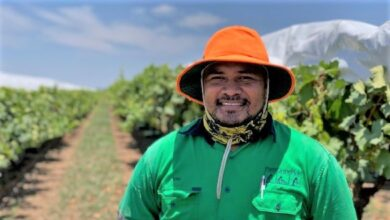 Photo of 'I make a lot more money here than Tonga': Grateful workers saving Queensland's harvest