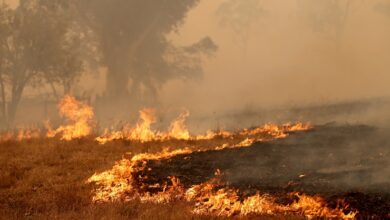 Photo of After a heatwave, is Australia ready for more fires?