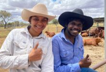 Photo of Indigenous stock handlers learn their craft in the Red Centre