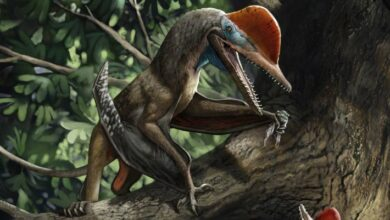 Photo of Small Jurassic Pterosaur Had an Opposed Thumb