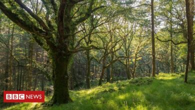Photo of UK woodlands 'at crisis point' amid wildlife decline