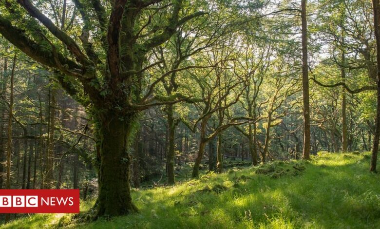 UK woodlands 'at crisis point' amid wildlife decline
