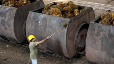 Photo of Malaysia in Talks to Double Palm Oil Shipments to Afghanistan