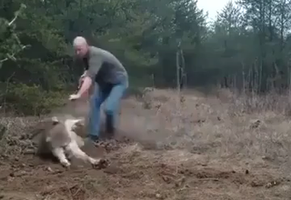 Photo of Good guy saving a trapped wolf