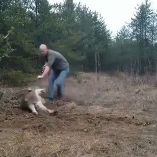 Good guy saving a trapped wolf