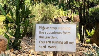 Photo of Stealing plants from a garden.. sad.